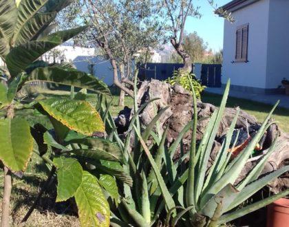 Ipotesi di giardino